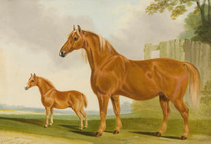 Suffolk Mare and Foal