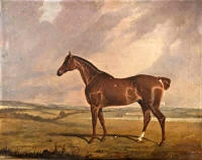 A Portrait of a Blood Horse in a Landscape