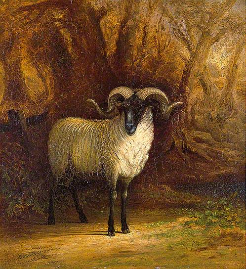 The Norfolk Sheep: A Portrait