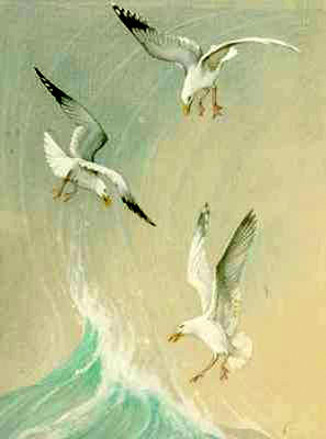 Three Seagulls above the Wave
