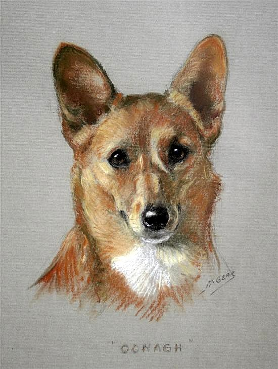 Portrait of a corgi 'Oonagh'