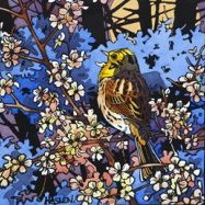 Singing Yellowhammer
