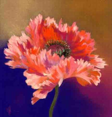 Oriental Poppy on Gold