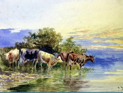 Cows by the River, Llandudno, Wales
