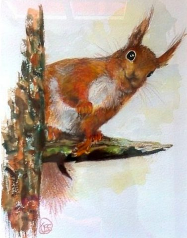 Red Squirrel in Pine Tree
