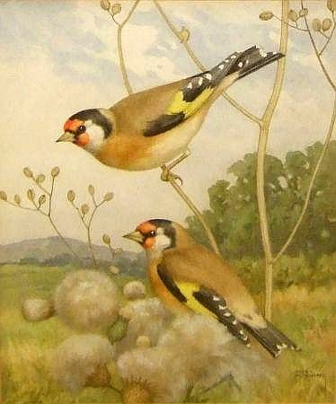 Goldfinches on Thistles