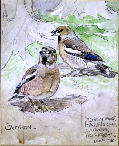 Study for Hawfinches under Hornbeams