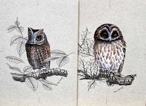 Study of Owls upon Branches