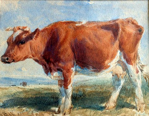 Study of an Ayrshire Cow