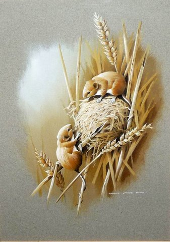 Pair of Harvest Mice