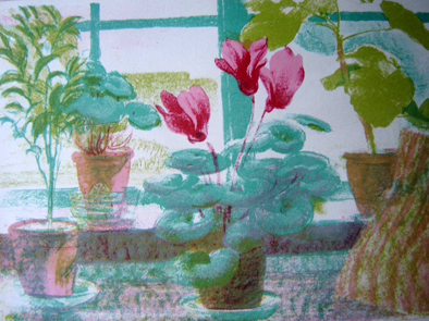 Cyclamen in the Window